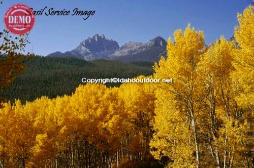Fall Aspens Fishhook Canyon Mount Heyburn