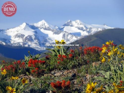 Ketchum Heidelberg Ridge Wildflowers Pioneer Mountain