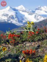 Wildflowers Ketchum Heidelberg Ridge Pioneer Mountain