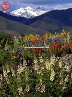Heidelberg Ridge Wildflowers Ketchum Pioneer Mountain