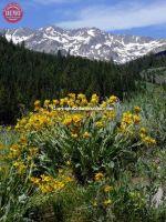 Boulder Mountain Wilderness Mules Ear
