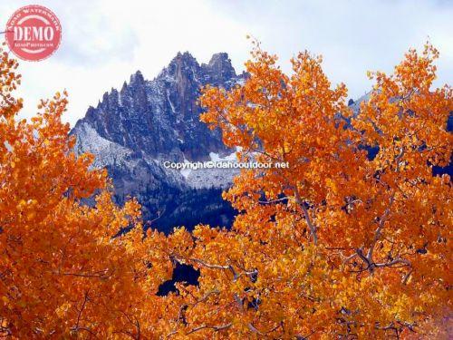 Mount Heyburn Aspens Sawtooths