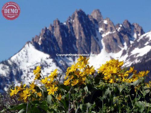 Mount Heyburn Fishhook Ridge Sawtooths
