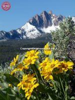 Mount Heyburn Mule's Ear Wildflowers