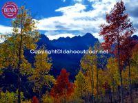 Sawtooths Fall Colors Fishhook Ridge Aspens