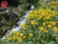 Wildflowers Norton Creek