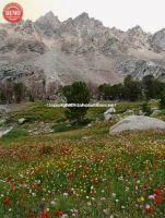 Wildflowers Surprise Valley Serrated Ridge