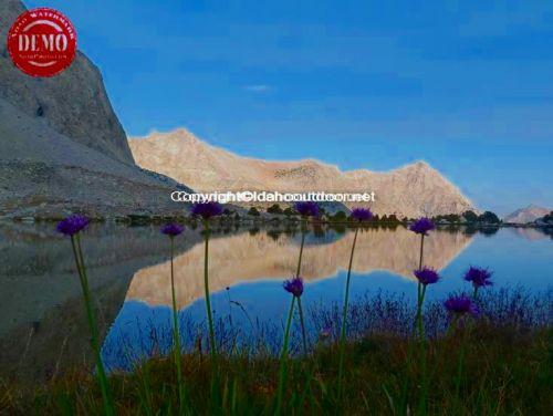 Wildflower Mountain Lake Sierras