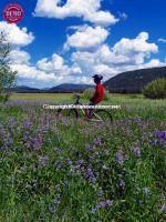 Mountain Biker Elk Meadows Sawtooths