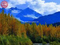 Colors Fall Near Exit Glacier