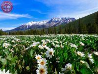 Wilderness Wildflower Boulder Mountain