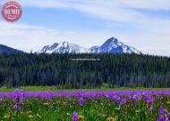 Wildflowers McGown Peak Sawtooth