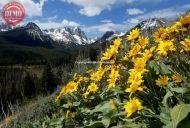 Sawtooths Wildflower Fishhook Ridge