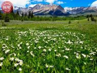 Wildflower Boulder Mountain Wilderness