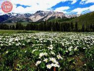 Wildflower Boulder Mountains Wilderness