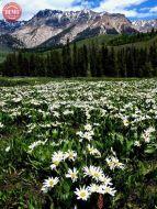 Wilderness Wildflower Boulder Mountains