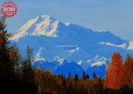 Fall Colors Denali Alaska