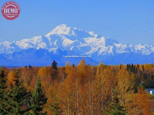 Alaska Fall Colors Denali